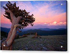 Lonesome Pine Acrylic Print by Jim Garrison