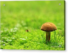 Lonesome Wild Mushroom On A Lush Green Meadow Acrylic Print