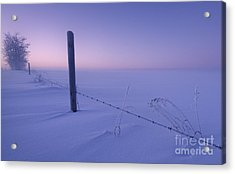 Lonesome Winter Acrylic Print by Dan Jurak