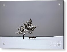 Lonesome Winter Acrylic Print by Karol Livote