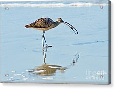 Long-billed Curlew With Crab Acrylic Print