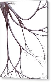 Acrylic Print featuring the drawing Long Branches by Giuseppe Epifani