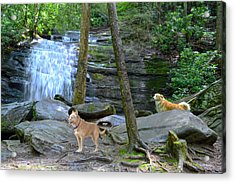 Long Creek Falls Acrylic Print by Bob Jackson