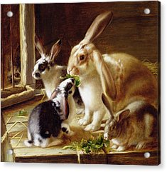 Long-eared Rabbits In A Cage Watched By A Cat Acrylic Print