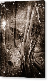 Long Forgotten Acrylic Print