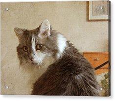 Long-haired Cat Portrait Acrylic Print