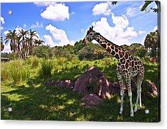 Long Neck Acrylic Print by Ryan Crane