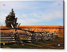 Long Shadows Acrylic Print