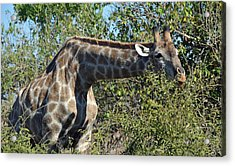 Long Stretch Acrylic Print by Allan McConnell