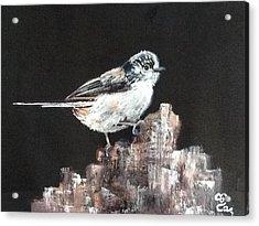 Long-tailed Tit Acrylic Print by Carole Robins