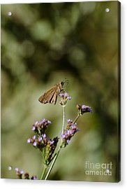 Long-winged Skipper Butterfly Acrylic Print