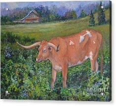 Longhorn Acrylic Print by Jana Baker