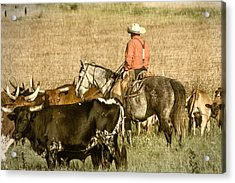 Acrylic Print featuring the photograph Longhorn Round Up by Steven Bateson