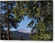 Longs Peak Through The Trees Acrylic Print by Kay Pickens