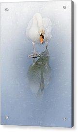 Look Alike Acrylic Print by Annie Snel