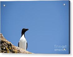 Look At Me Acrylic Print by Anne Gilbert