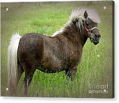 Look At My Hair Acrylic Print
