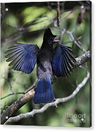 Look At My Wings Acrylic Print