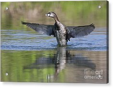 Look At My Wings Acrylic Print by Ruth Jolly