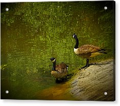 Look Before You Leap Acrylic Print by Dave Bosse