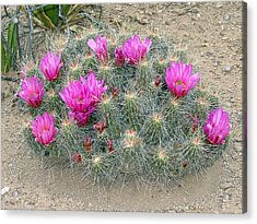 Acrylic Print featuring the photograph Look But Don't Touch by Linda Cox