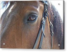 Look In My Eye Acrylic Print