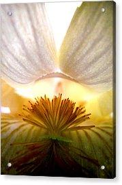 Look Inside The Iris Acrylic Print by Virginia Forbes