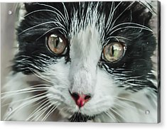 Look Into My Eyes  Acrylic Print by Naomi Burgess