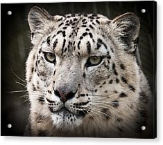 Look Into My Leopard Eyes Acrylic Print