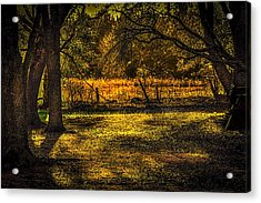 Look Into The Golden Light Acrylic Print by Marvin Spates