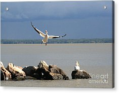 Look Ma - I Can Fly Acrylic Print