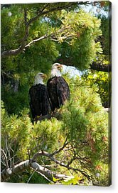 Acrylic Print featuring the photograph Look Over There by Brenda Jacobs