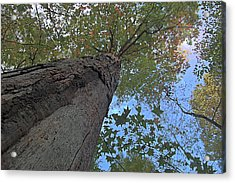 Acrylic Print featuring the photograph Look Up by Michael Donahue