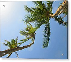 Look Up Acrylic Print by Pete Marchetto