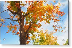 Look Up Acrylic Print by Scott Cameron