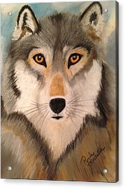 Looking At A Timber Wolf Acrylic Print