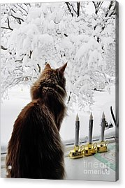 Looking At The Winter Wonderland Acrylic Print by Judy Via-Wolff