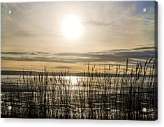 Looking At Wales Through The Grass Acrylic Print