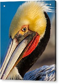 Looking At You Acrylic Print by Dale Nelson