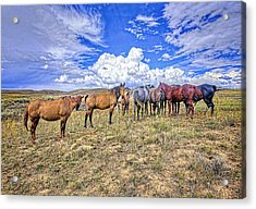 Looking Back Acrylic Print by James Steele