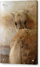 Looking Behind Acrylic Print