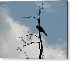 Acrylic Print featuring the photograph Looking Down On Me  by Michael Krek