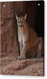 Looking For A Meal Acrylic Print by Daniel Hebard