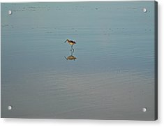 Looking For Love Acrylic Print