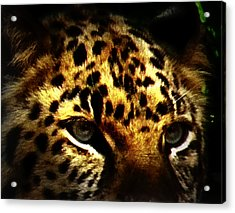 Looking For Prey Acrylic Print