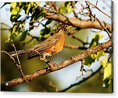 Acrylic Print featuring the photograph Looking For Spring by Shirley Heier