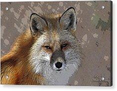 Looking Foxy Acrylic Print