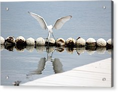 Looking Glass Acrylic Print