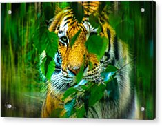 Looking Into My Soul Acrylic Print by Glenn Feron