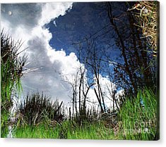 Acrylic Print featuring the photograph Looking Into The Bog by Joy Nichols